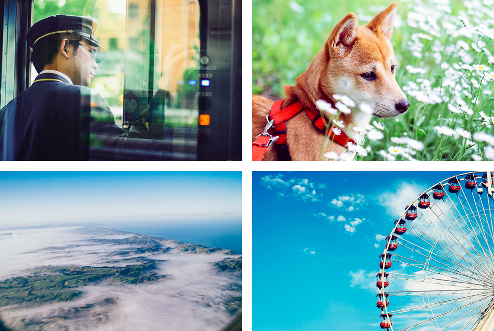 CECEY ZHANG / Travel + incredibly-cute-shiba-inu photography